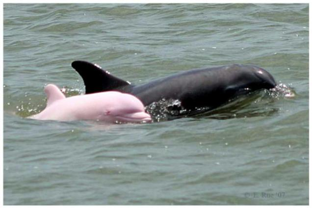 pink-dolphin.jpg